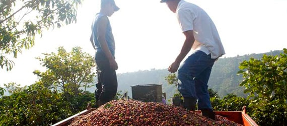 coffee growers and suppliers