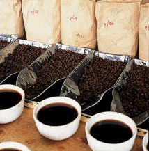 Coffe cups lined up in front of coffee beans